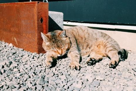 Hostel Kitty