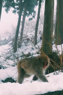 gokudani Monkey Park