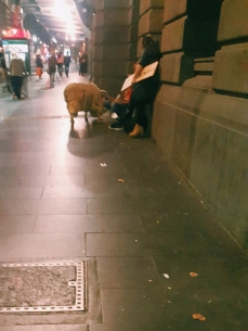 Sidewalk sheep
