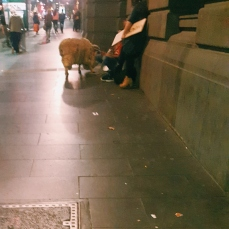 Sidewalk sheep